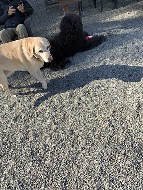 Playful_dog